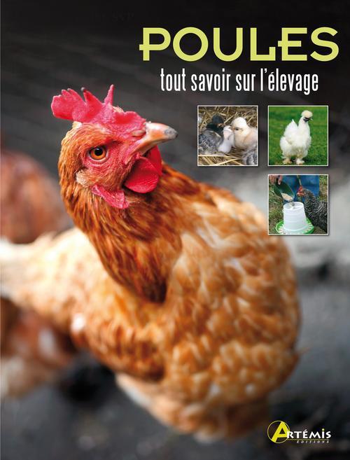Poules ; Tout Savoir Sur L'Elevage