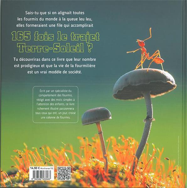 Le monde fascinant des fourmis